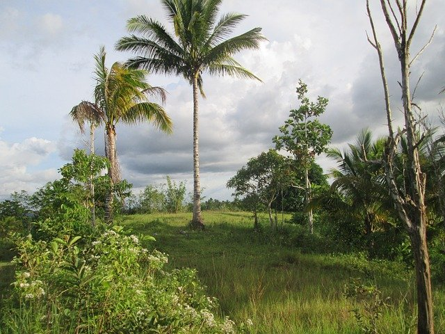 palm-trees-245430_640